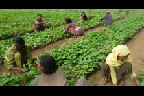 Unit 5: Soil, Food, Agriculture, and Pest Management